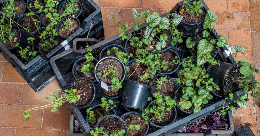 plantering innergård stockholm