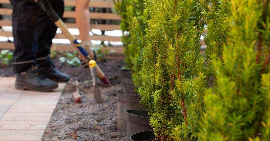 plantering skötsel innergårdsrenovering