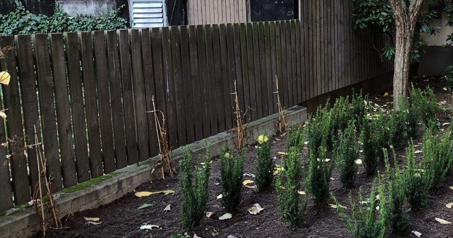 brf-innergård-trädgårdsrenovering