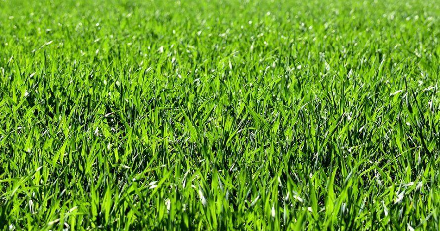gräs anläggning jemark hammarbybacken