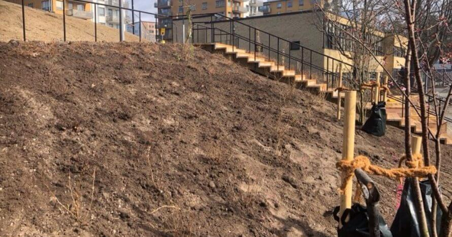 plantering-perenner-je-mark