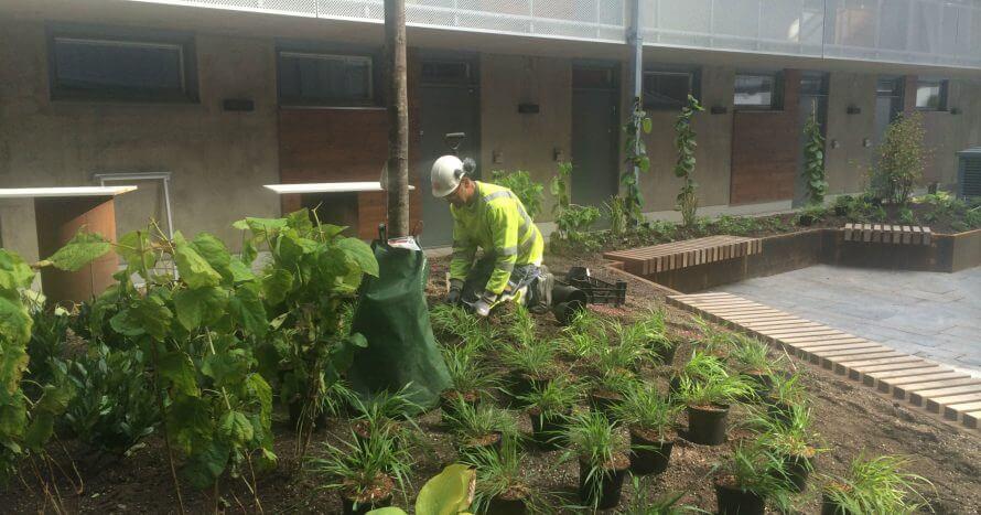 JE-Mark Anläggning skötsel innergård plantering